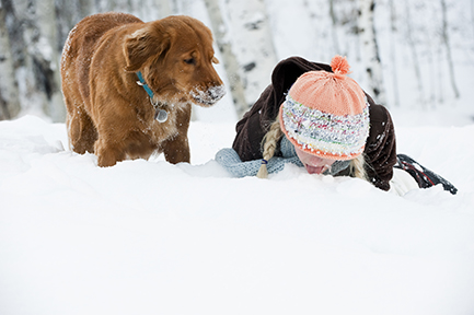 Golden Retriever Winter Fun